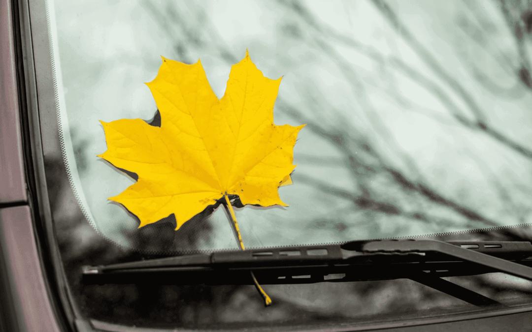 Conduite en automne