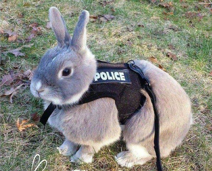 Bugsy, lapin stupéfiant